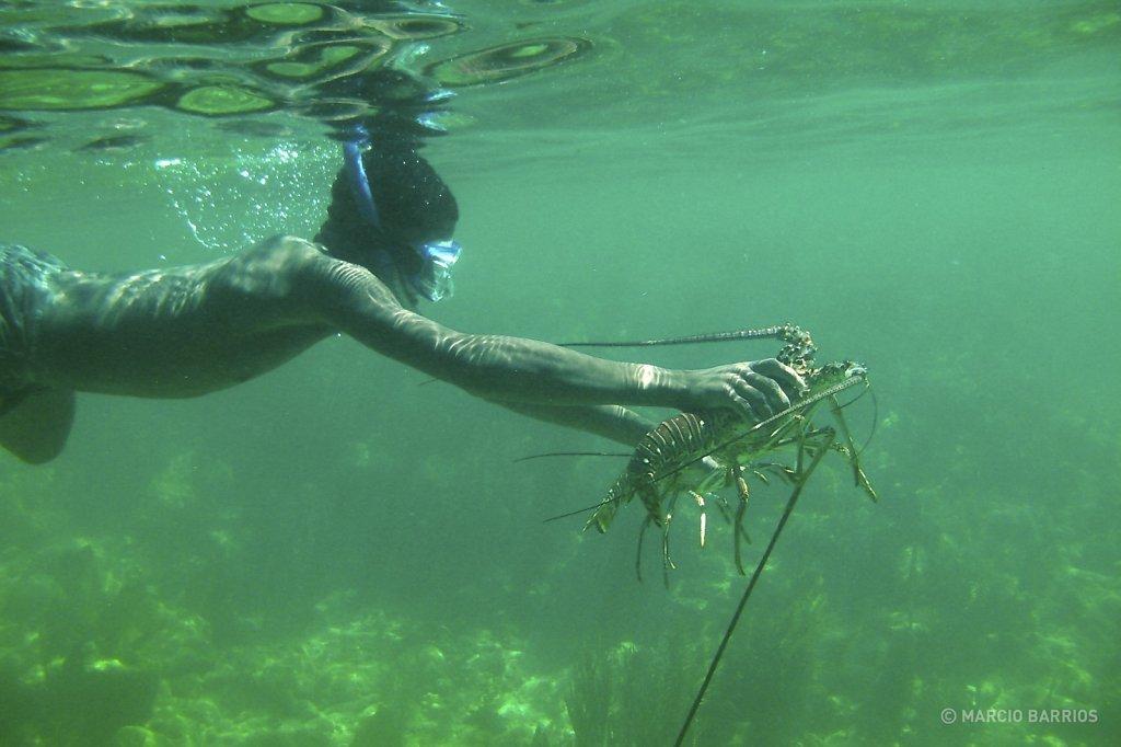 Garifuna boy fishing two lobsters
