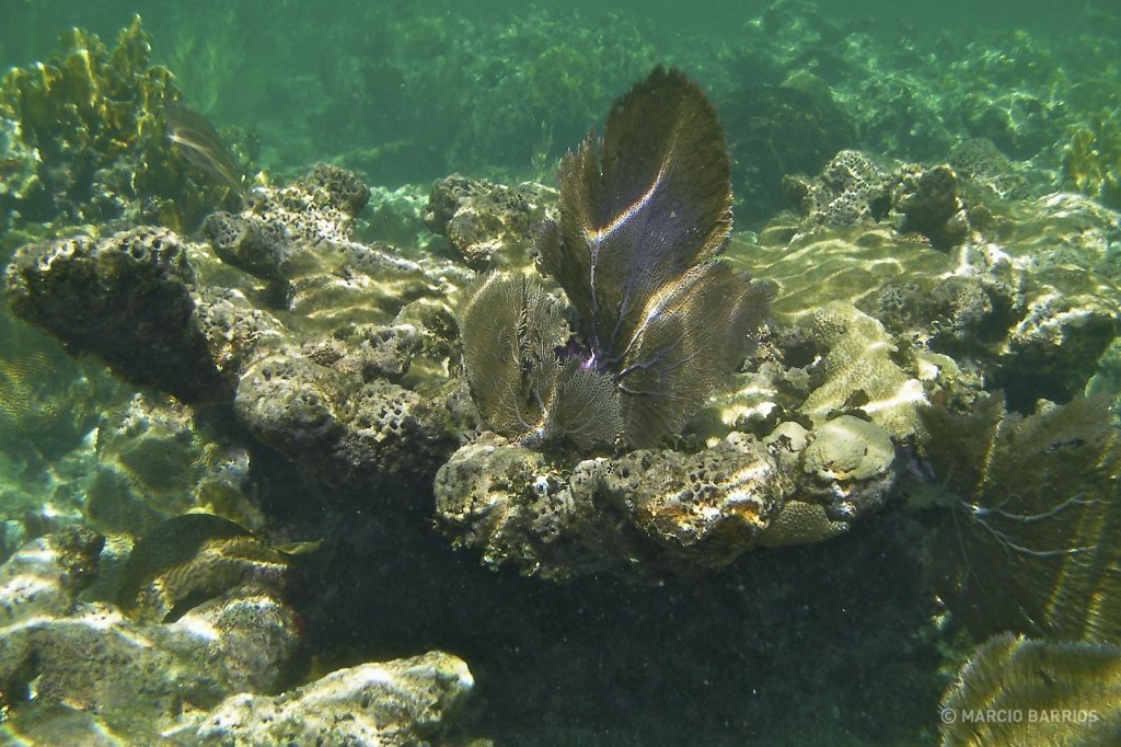 Coral reef around Chachauate