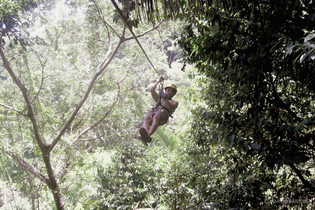 Canopy in Glenda's Paradise