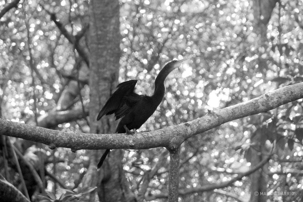 Beautiful bird in Cacao Lagoon