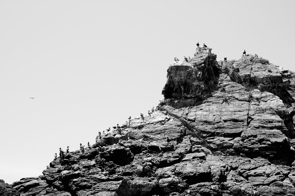 Long line of birds on top of a big rock