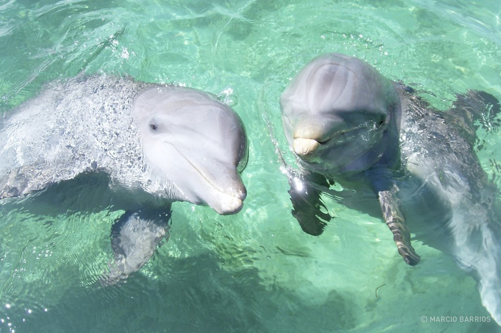 A couple of friendly dolphins in Anthony's key